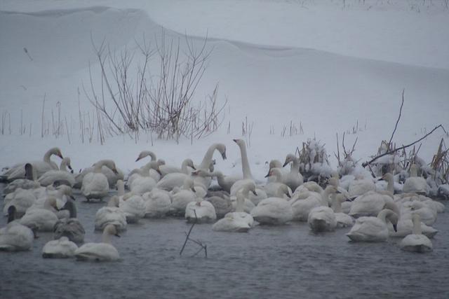 厳冬の最上川