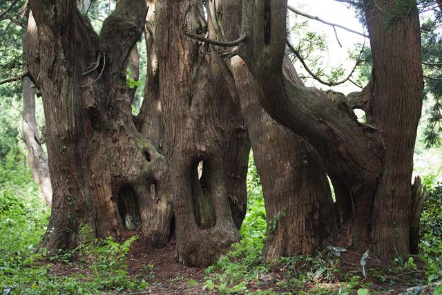 不思議の森