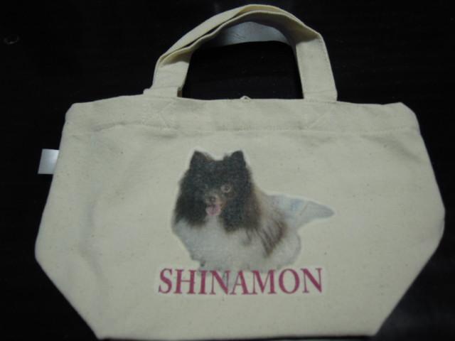 シナモン1 521