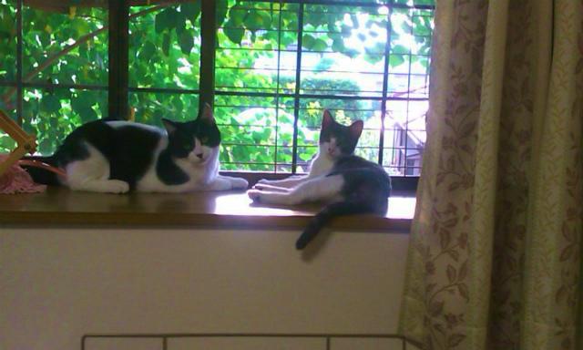 窓辺の風太君とアイちゃん
