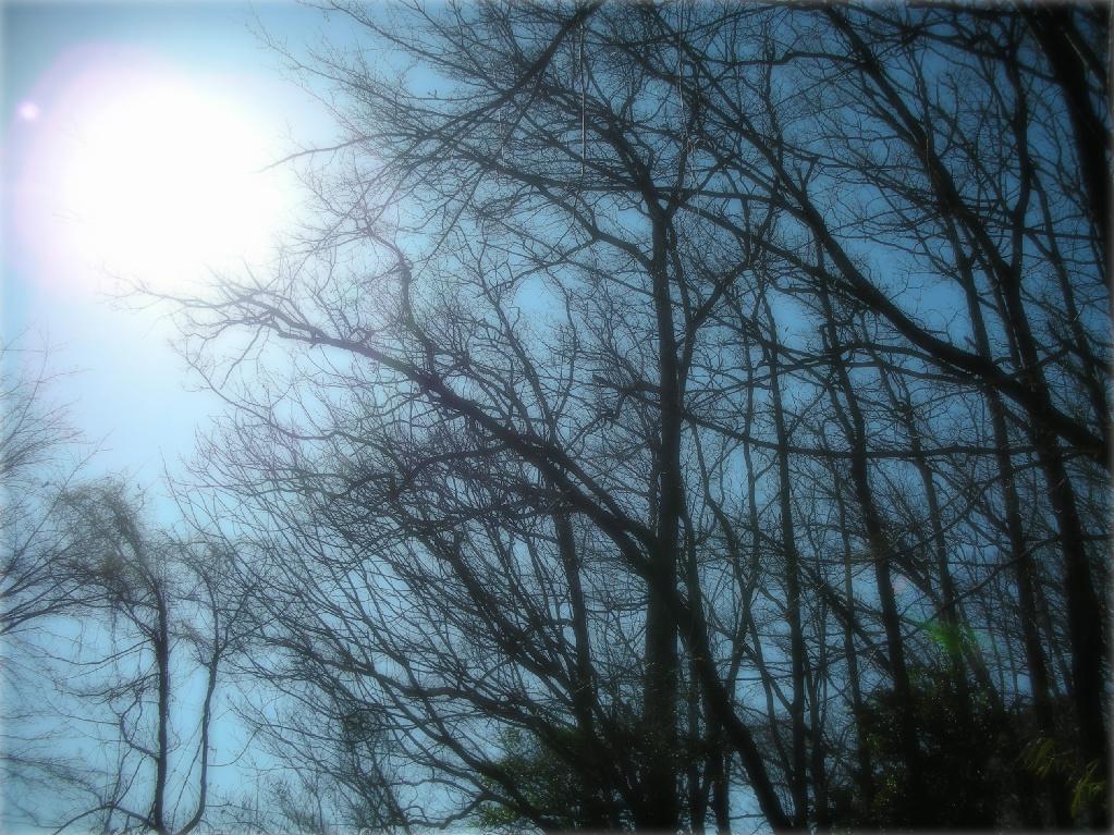 FotoFlexer_木々