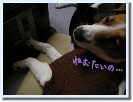 FotoFlexer_Photo_20110110182654.jpg