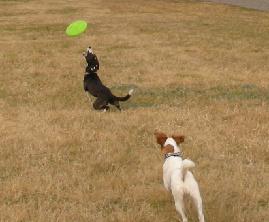 catch!.jpg