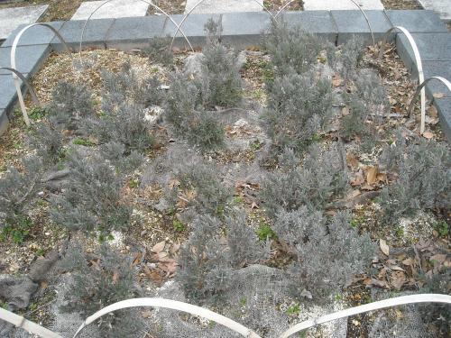 2011 2月 花壇