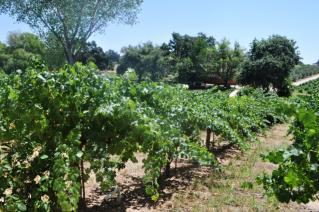 Wine trees