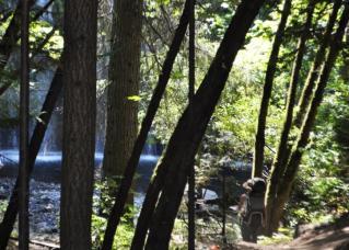 静寂の中で輝く滝