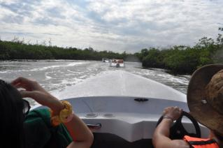 Driving through Mangroves