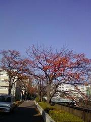 s-画像-0062