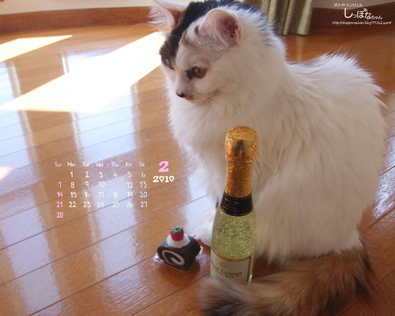 しっぽなちゃんカレンダー2月