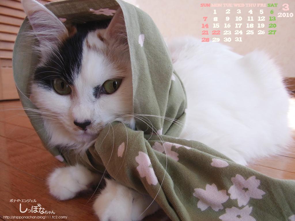 しっぽなちゃんカレンダー3月