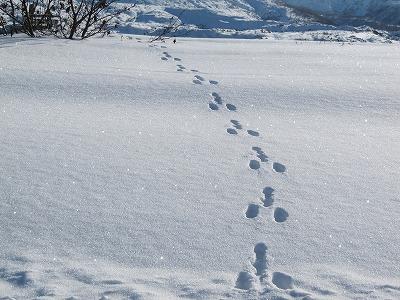ウサギさんの足跡。。。