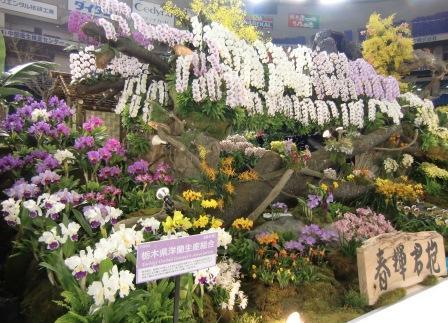 栃木県洋蘭生産組合最優秀賞
