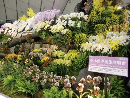 栃木県洋蘭生産組合