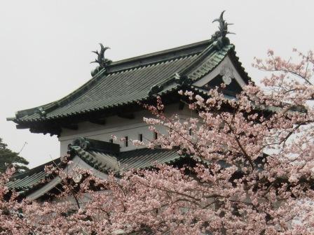 弘前城 天守閣と桜