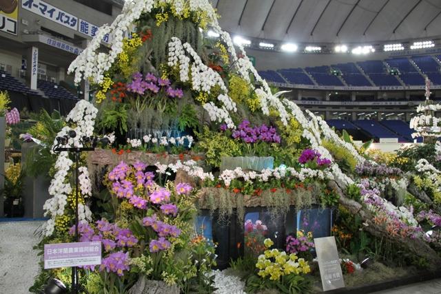 日本洋蘭農業協同組合