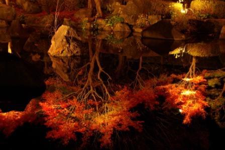 水面に紅葉