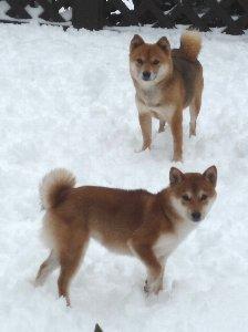 雪って楽しいね!
