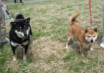 チャコちゃん&ナナちゃん