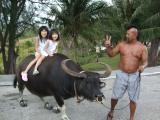 cow1_convert_20100522215750[1]