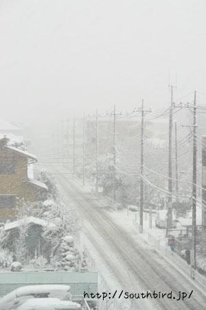 大雪~(>_