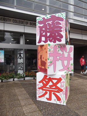 DSCF1198藤桜祭