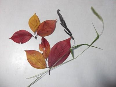 DSCF1279落ち葉