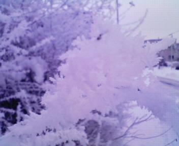 千歳の冬2
