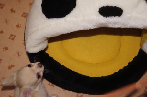 DSC01189_convert_20120404002843.jpg