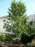 0408-1樹木