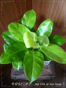 0509-2植物