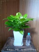 0509-1植物