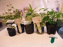 0511-3植物