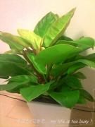 0513-1観葉植物