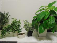 0911-3植物