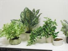 0911-2植物