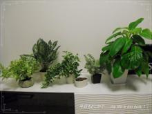 0911-1植物