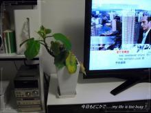 0203-1植物