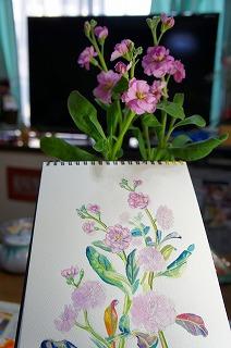 2011.1.29(ストックの花の絵) 012