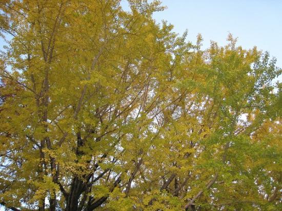 2009/11/23高知城公園紅葉2