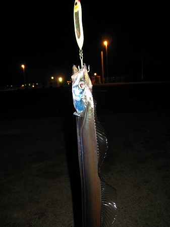 2009/12/01/太刀魚3