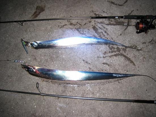2009/12/03太刀魚ダブルヒット
