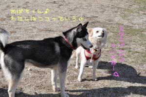 02.07愛ハス6