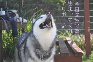 05.02愛ハス