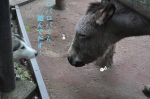 05.28動物園12