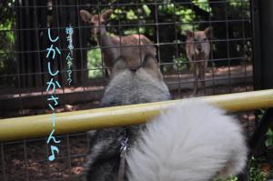 05.28動物園8