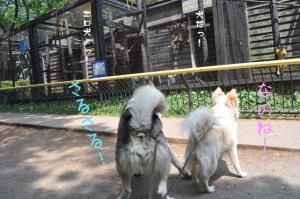 05.28動物園7