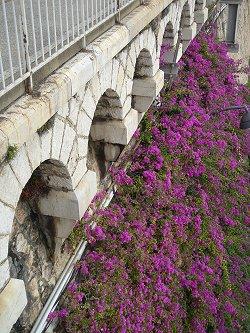 VilleFranche ホーム下の崖は花がいっぱいdonsize