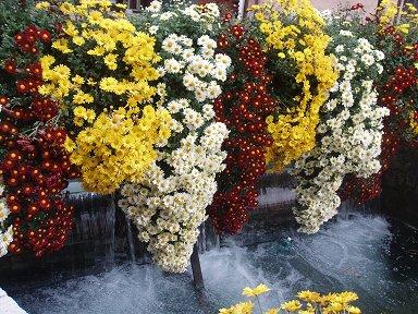 水に垂れそうな花で飾られたティウー運河downsize