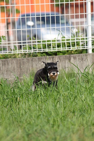 gagaga2_20110725210330.jpg