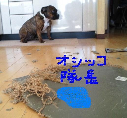 2011012010410002.jpg